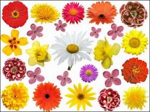 Aprender Todo Sobre Las Flores Para Ninos