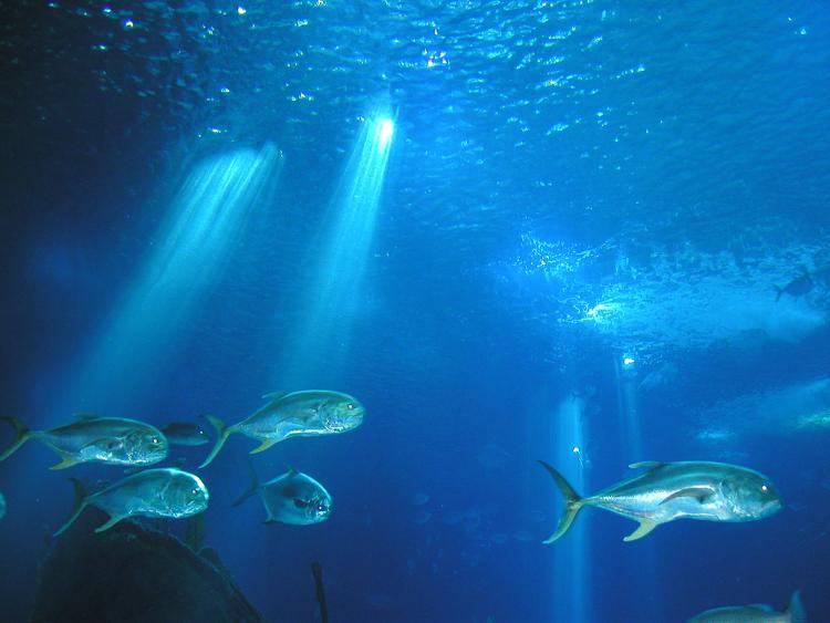 Imagenes De Los Oceanos